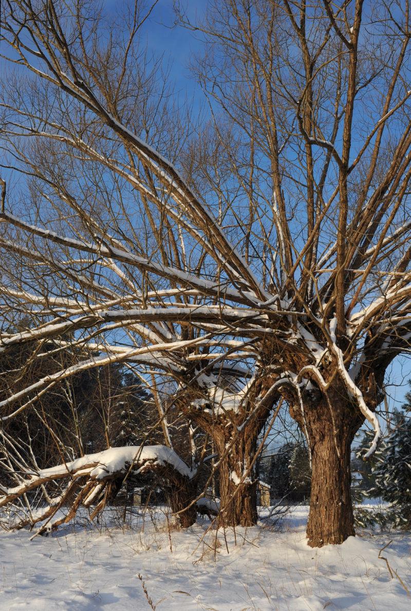 Moje ulubione drzewo... 2010