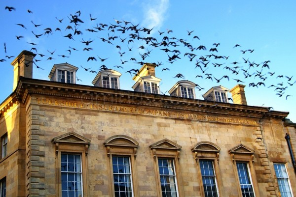 Birds flocking from the roof of an old building