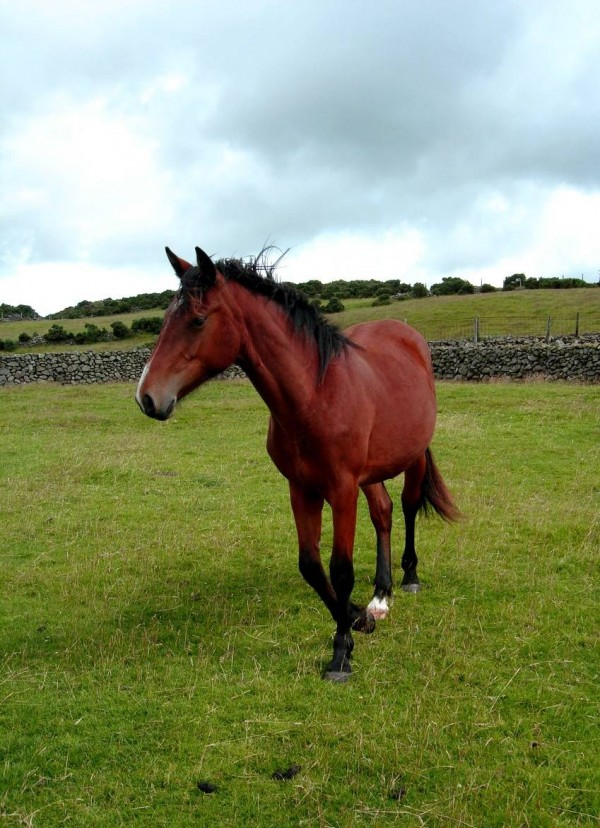 Horse on my cousins farm
