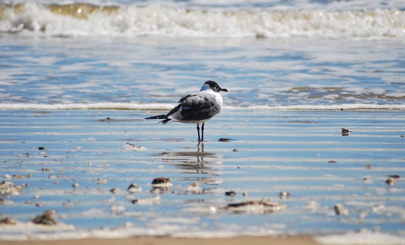 Picture of a seagull taken in Galveston