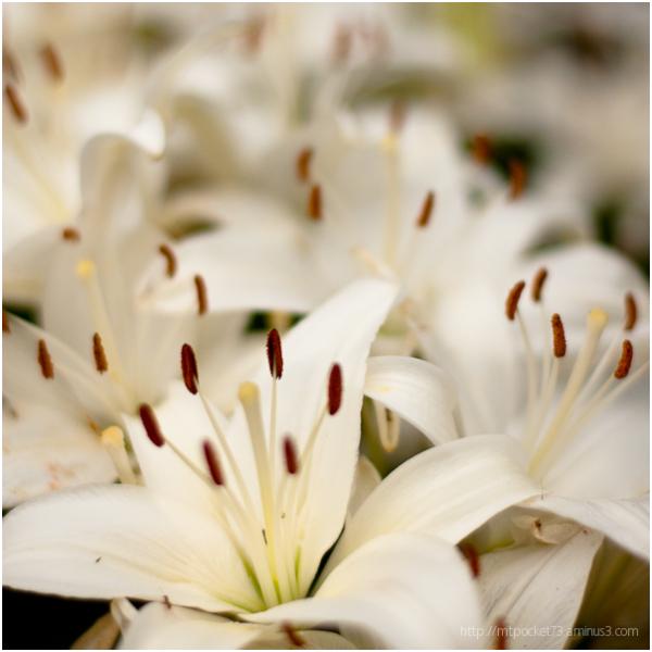 Untitled Flower - 5