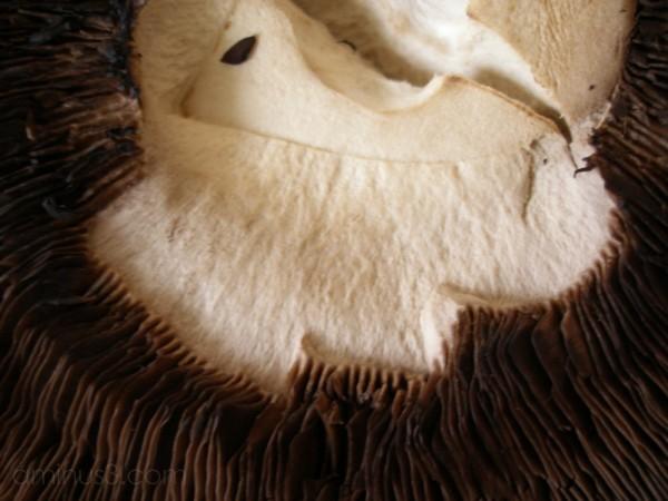 A large portebella mushroom with a face