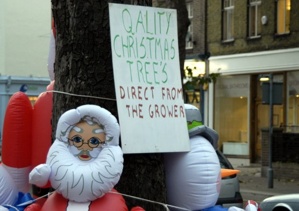 QALITY CHRISTMAS TREE'S
