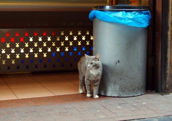 Garbage cat