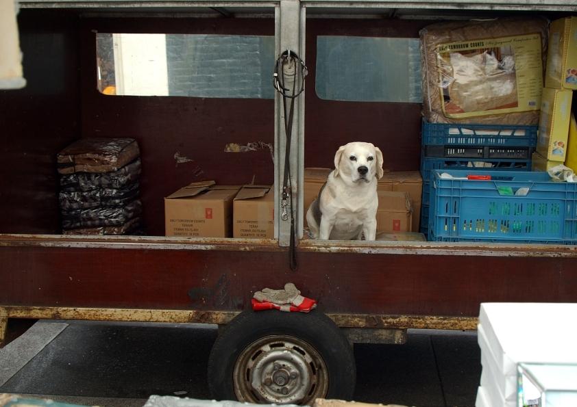 Truck dog