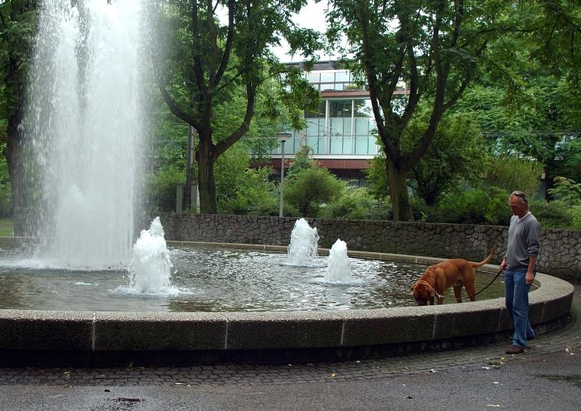 Fountain dog