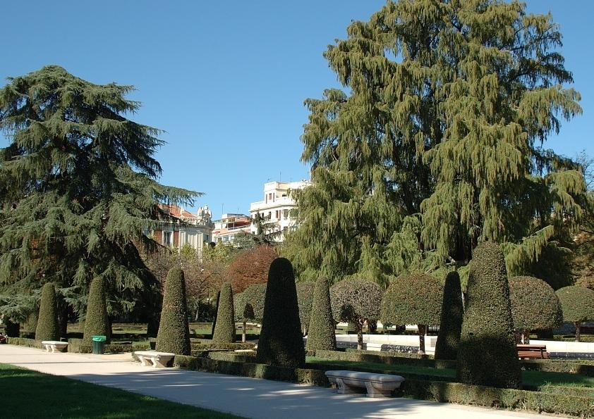 Retiro Trees