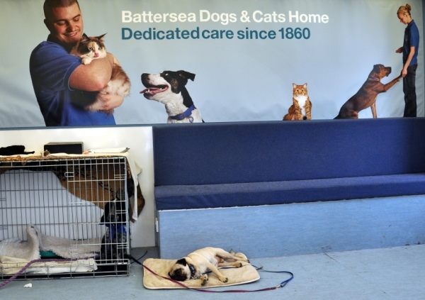 Battersea... Dedicated care since 1860