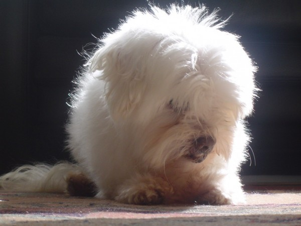 Dog in the sunlight