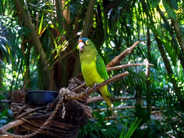A very beautiful parrot