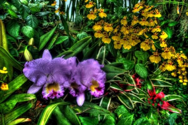Purple Glory