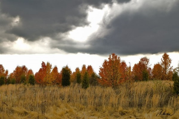 Dark storm clouds gather over autumn trees