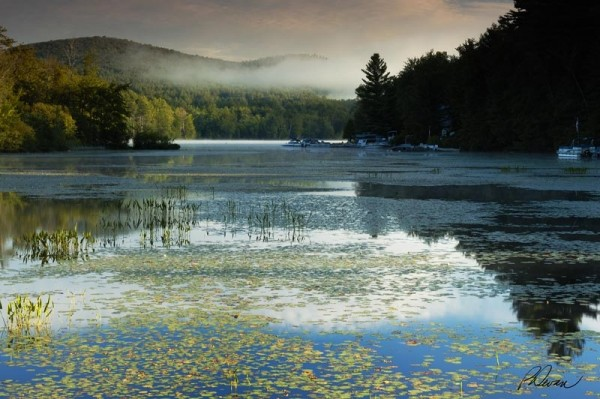 Lily Pads and Fog on Loon Lake, Adirondack Mtns