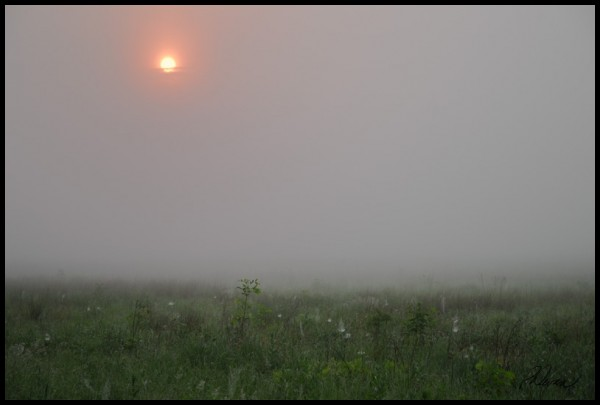A foggy field in New Hanover Township, PA