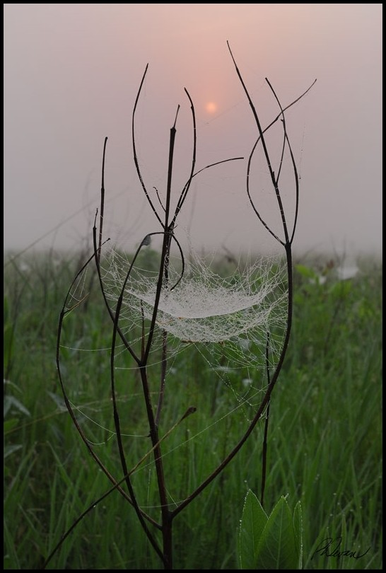 Insect web in fog backlit by morning sun