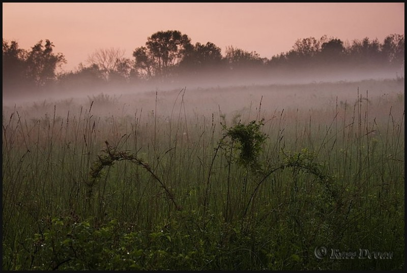 Foggy farm field after sunset
