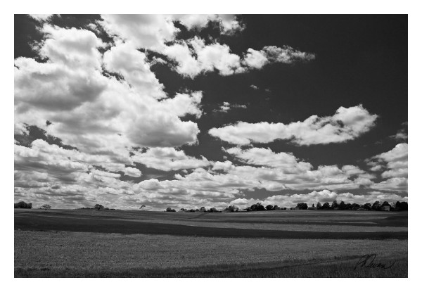 Puffy clouds over farm field, Bechtelsville, PA