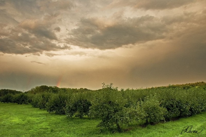 thunderstorm clouds and rainbow over apple orchard