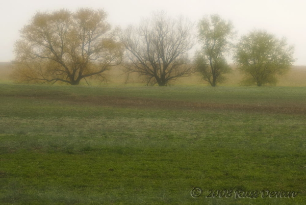 Four trees at end of a farm field