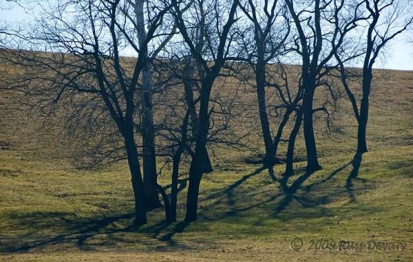Grove of Trees, Unionville, Pennsylvania
