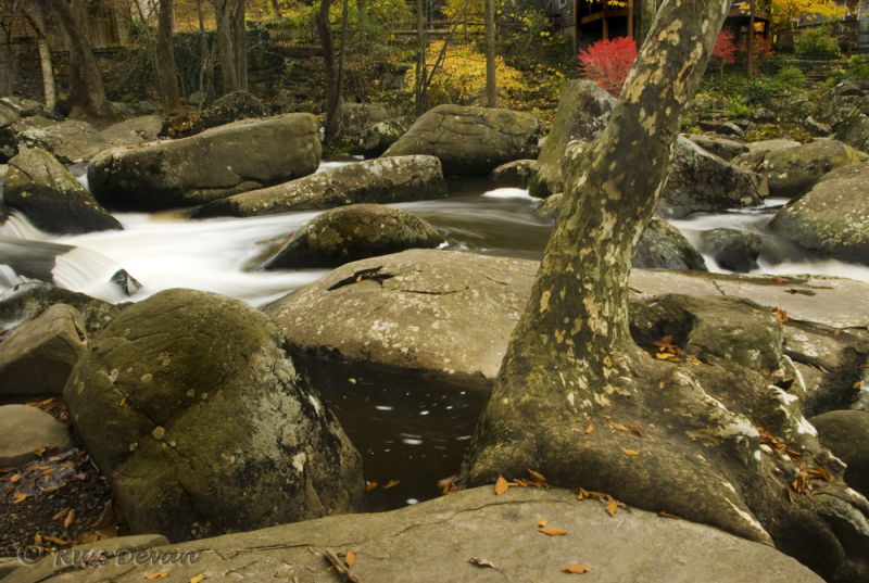Sycamore and Boulders, French Creek
