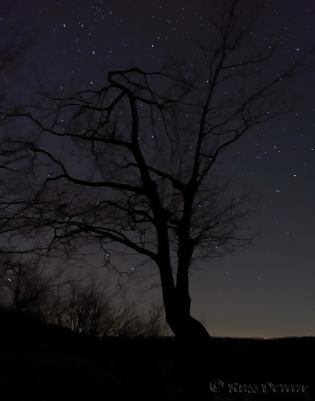 Tree and Star Field, Hawk Mountain