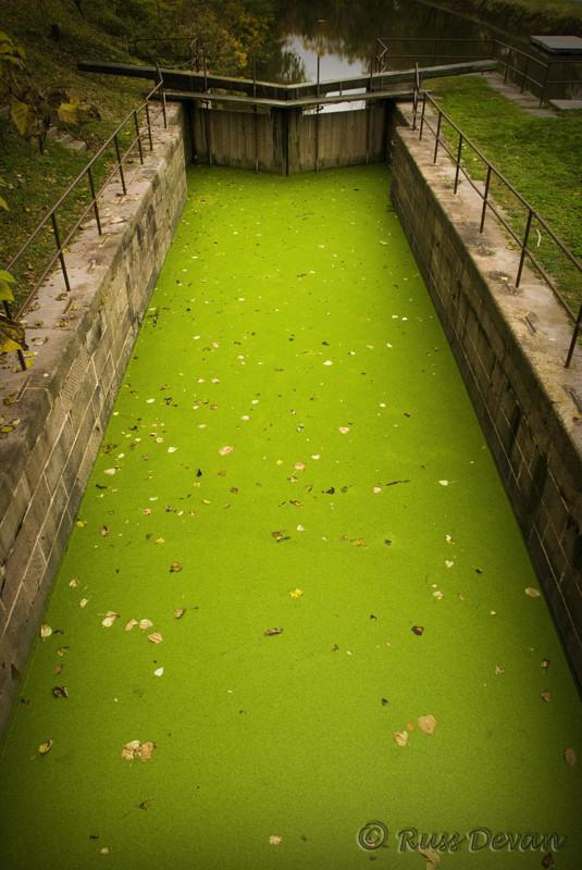 Emerald Carpet