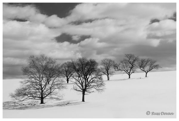 Trees on Hillside, Hereford, Pennsylvania
