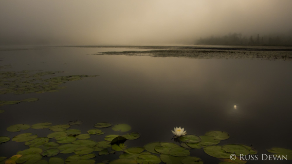 Morning Fog, Oxbow Lake