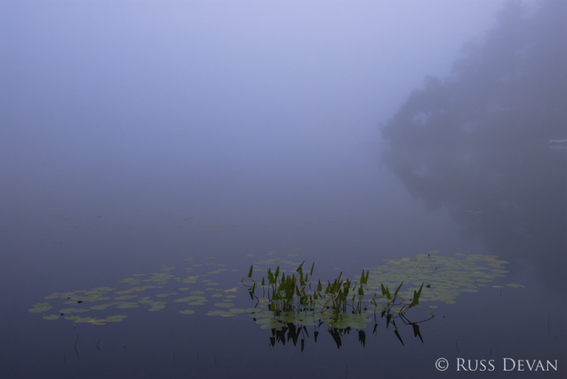 Foggy lake in the evening