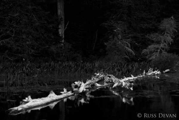 Weathered Log, Oxbow Lake