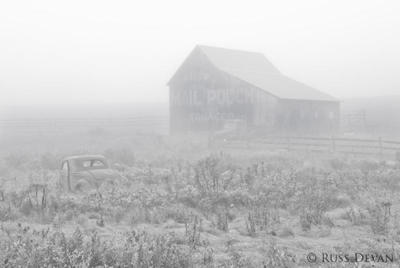 Bucolic in Fog