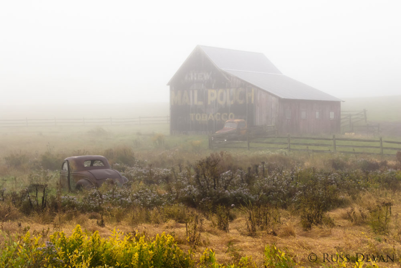 Bucolic in Fog II