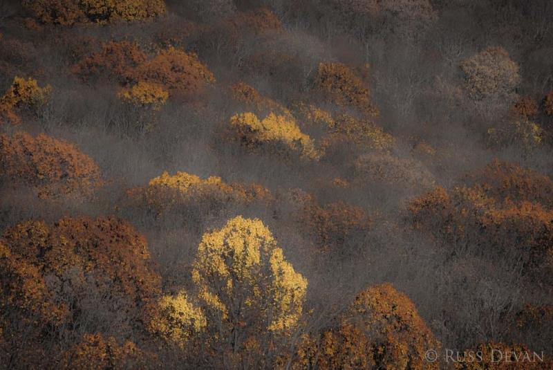Autumn Palette, Appalachian Trail