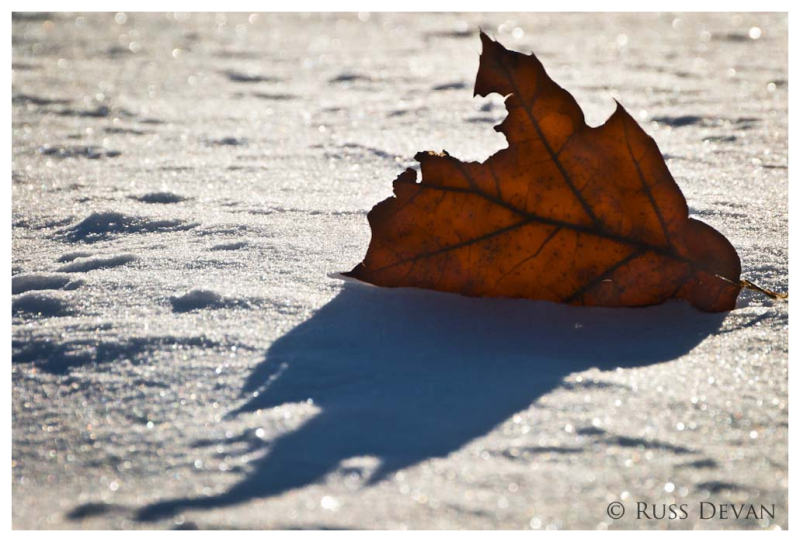 Oak Leaf Trapped in Snow, Hopewell Lake