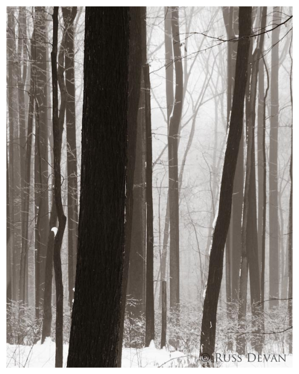 Of Fog and Forest