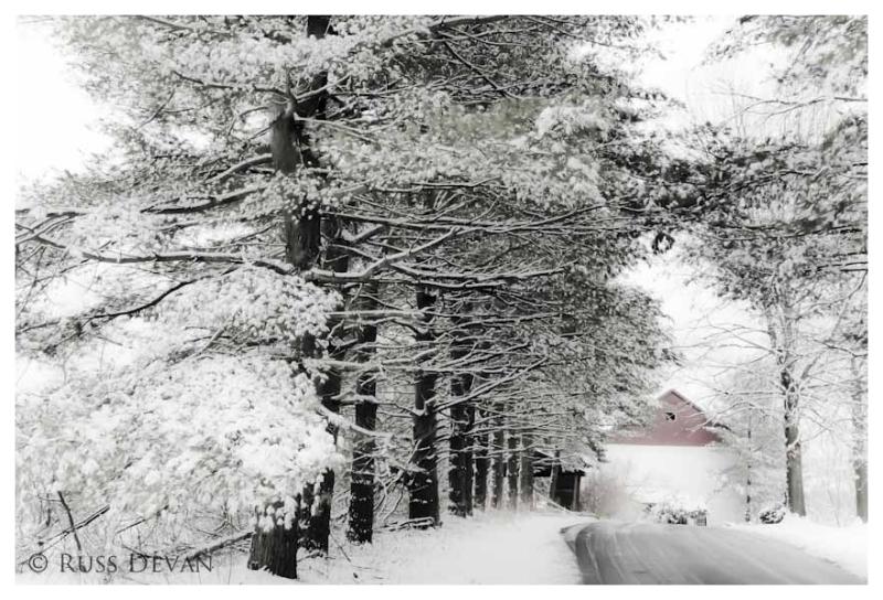 White Pines, New Hanover