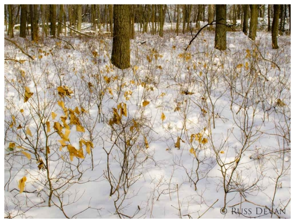 Forest Saplings, East Shore of Bruce Lake