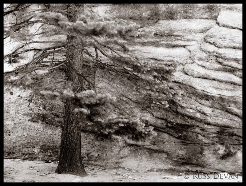 Ponderosa Pine and Cliff, Tooth Ridge