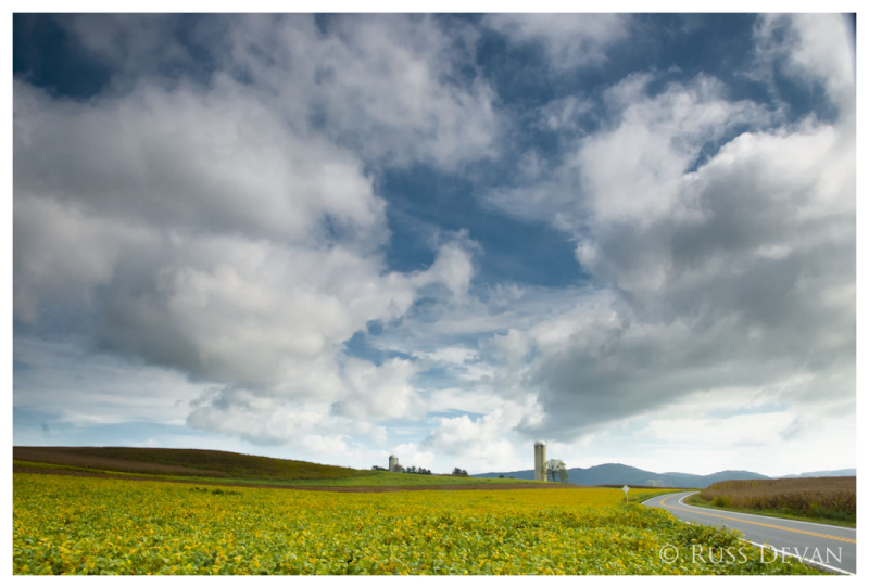 Oley Valley Bean Field