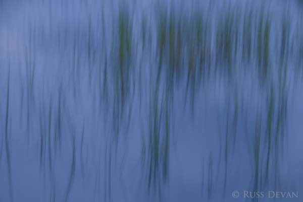 Reeds in Tracy Pond, Baxter State Park