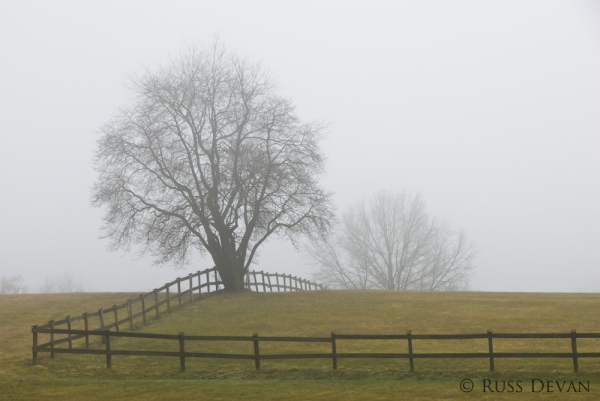 Fence in the Fog