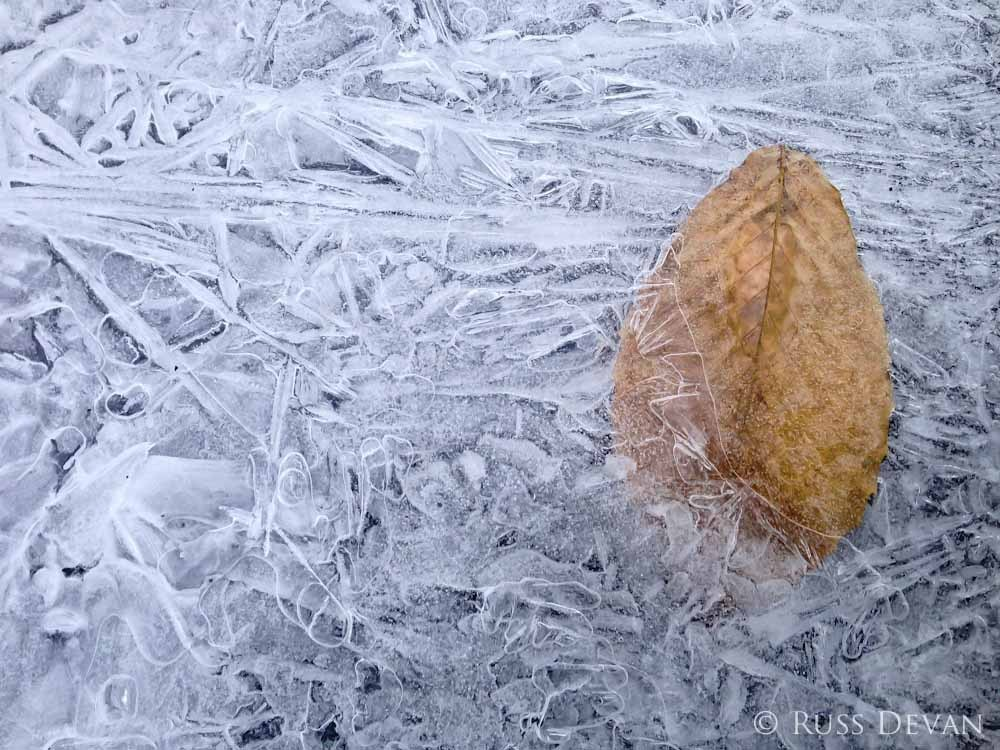 Leaf encrusted in ice crystals in a frozen pond