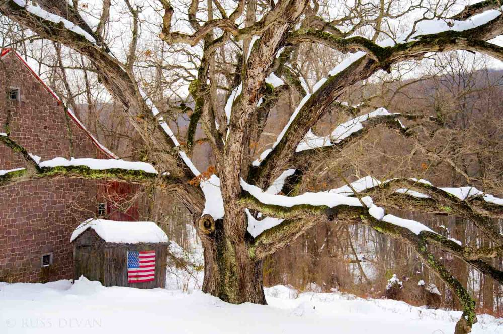 snow-covered oak tree next to stone barn w/US flag