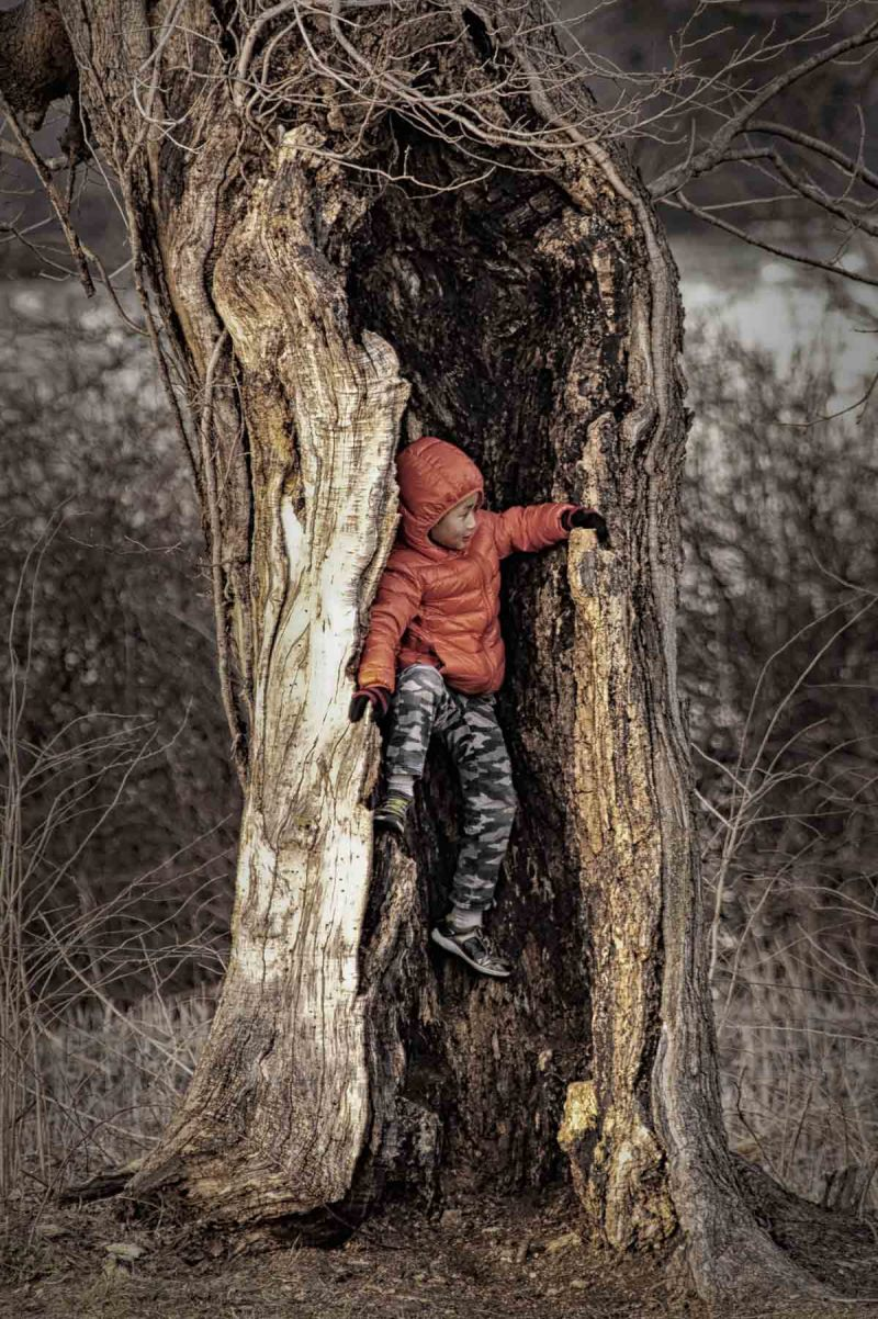 small boy playing in a tree