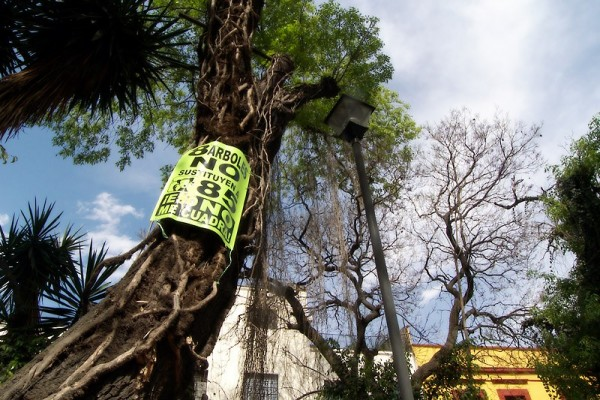 8 árboles no reemplazan 85