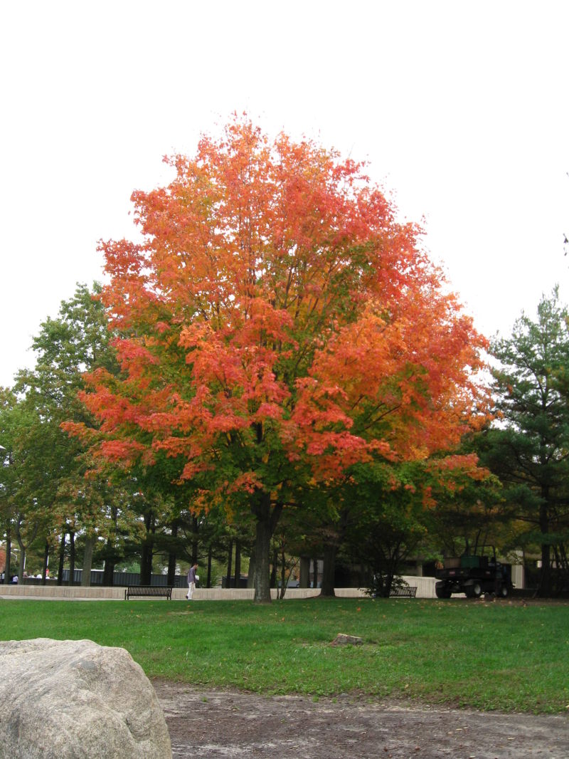 Pretty tree near the Sports Comples