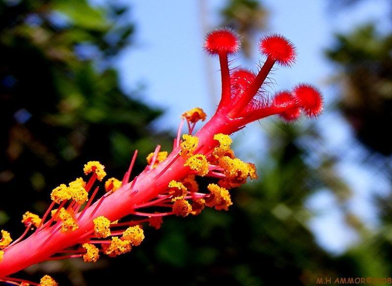 La fleur d