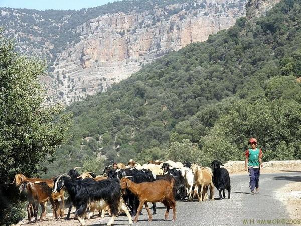 Route d'Afourer