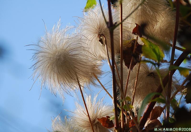 Au soleil et au vent